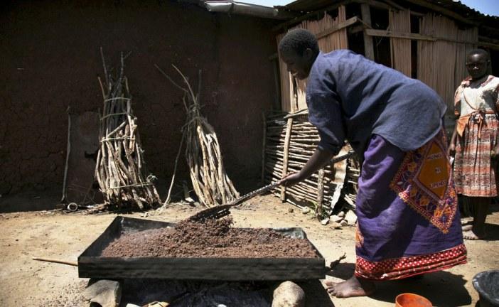 What ancient African fermentation techniques reveal about probiotics