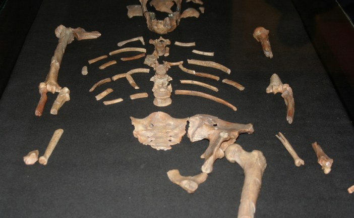 Meet 3-million-year-old Lucy – she'll tell you a lot about modern African heritage