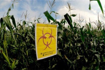 """The Corporate Capture of Our Food Production"": No GMOs in the EU, No GMOs in Africa!"