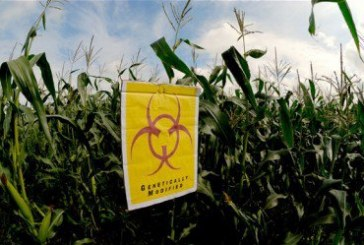 """""""The Corporate Capture of Our Food Production"""": No GMOs in the EU, No GMOs in Africa!"""