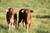 Better livestock policies in Africa offer a pathway out of poverty