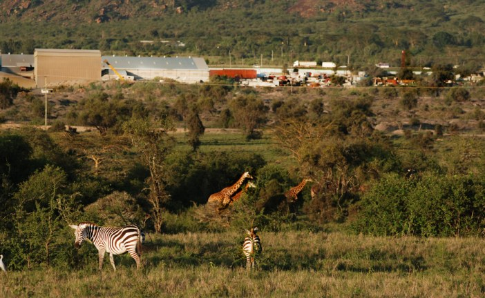 Development has devastated wildlife in lands south of Nairobi
