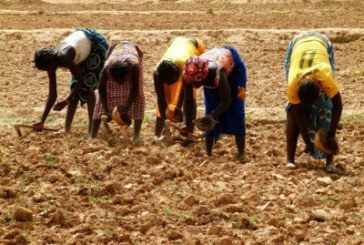 "Entrenching Capitalist Agriculture in India Under the Guise of ""Development"""