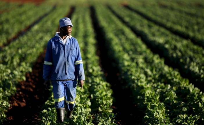 South Africa's land reform efforts lack a focus on struggling farmers