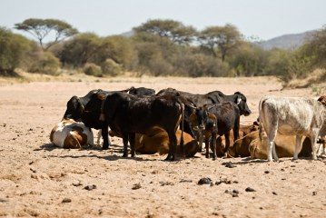 Drought in southern Africa points to urgent need for climate change plans