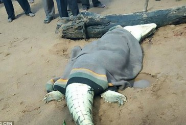 Remains of an eight year old boy is found in the belly of a crocodile
