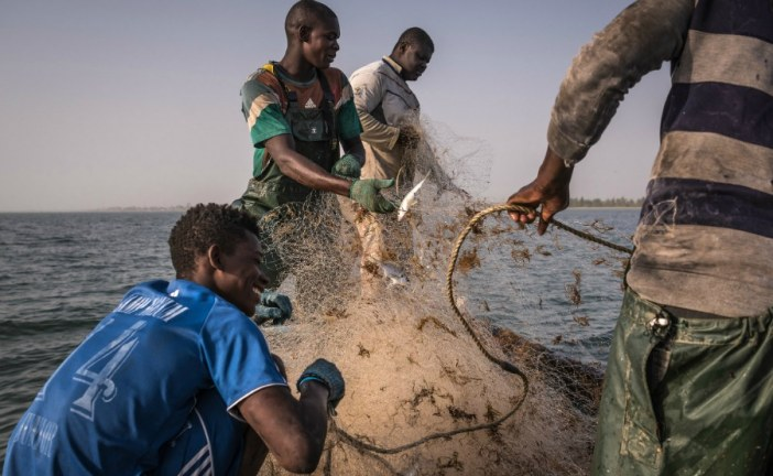 China's Appetite Pushes Fisheries to the Brink in Africa