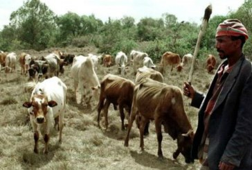 Kenya approves cows for cash law