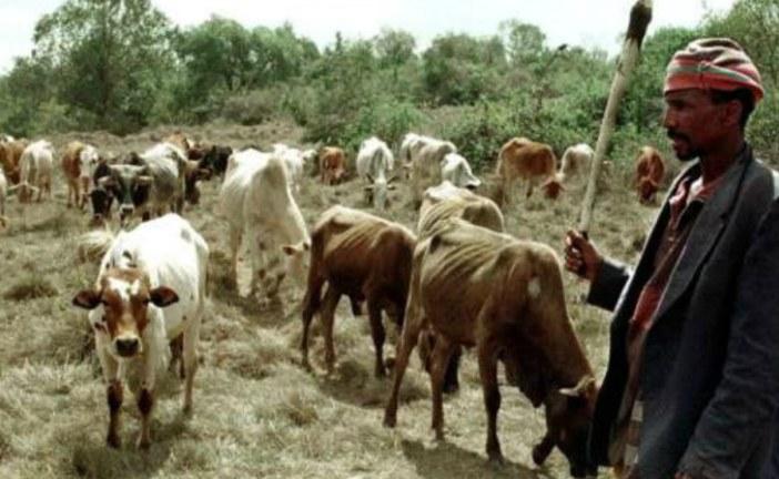 Kenya approves cows for cash law