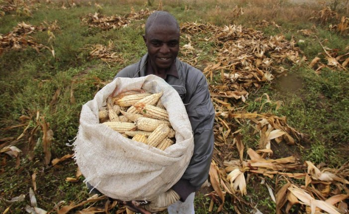 Why reducing post-harvest losses is a priority for Africa