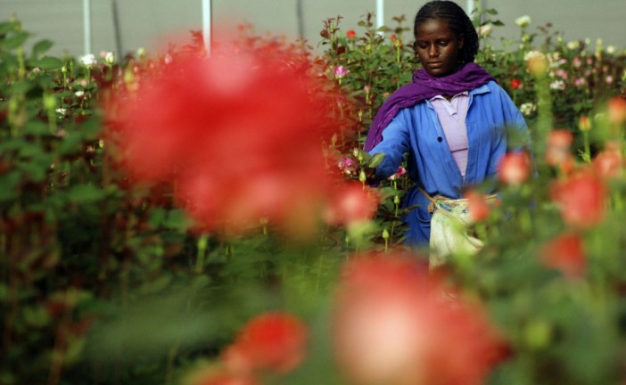 Why Ethiopia is on track to become Africa's industrial powerhouse