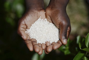 Sub-Saharan Africa has a long way to go before it cracks food insecurity