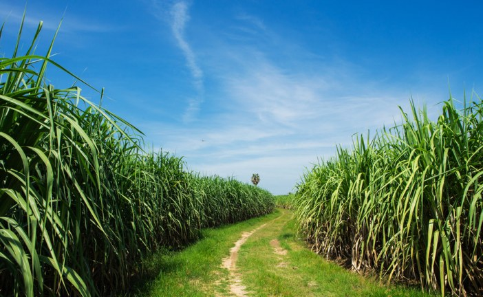 How science can genetically strengthen endangered plants and agriculture
