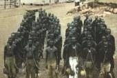 Western Australia 1904: The Australian Holocaust