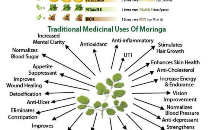 Imported from India, the Moringa plant makes a big financial & nutritional splash in Africa.