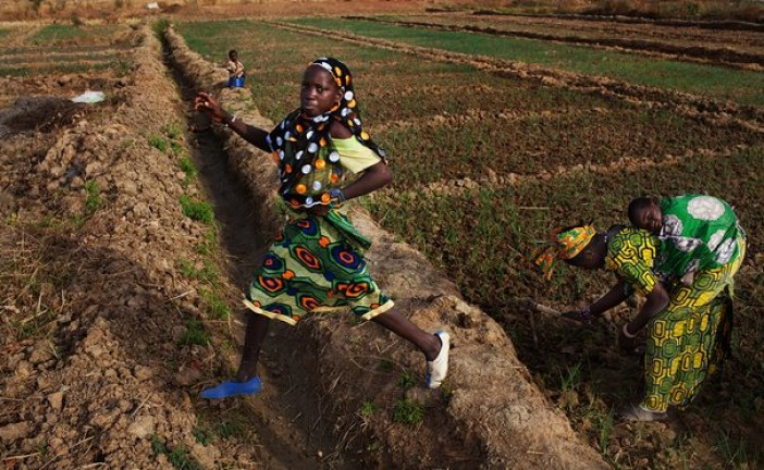 Agriculture will drive Africa's rise to economic power
