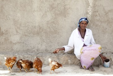If Africa learnt to feed its chickens it could feed its people