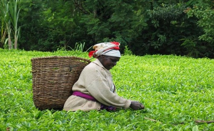 Africa spends 35 billion US dollars in importing food