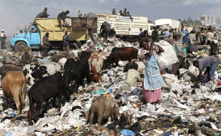 How an 'urban zoo' project in Kenya is helping unpack the spread of disease