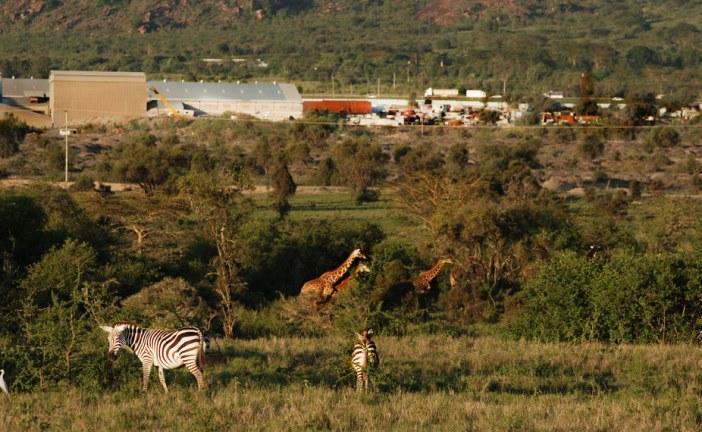 Development has devastated wildlife in lands south of Nairobi