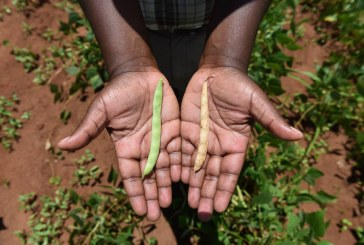 Africa's agriculture projects are growing inequality, not food