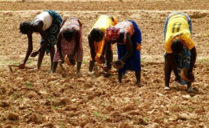 """Entrenching Capitalist Agriculture in India Under the Guise of """"Development"""""""