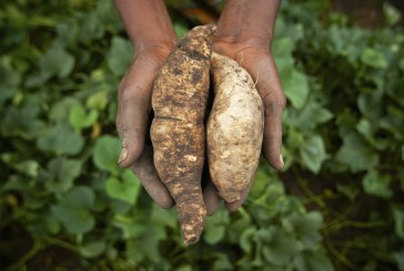 Feeding Africa: Australian knowledge helps meet a continent's climate change challenges