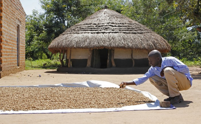 Why the US has a lot to gain from investing in Africa's agri-food systems