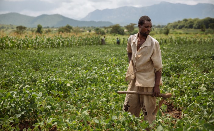 Is Africa really undergoing a smallholder agricultural revolution?