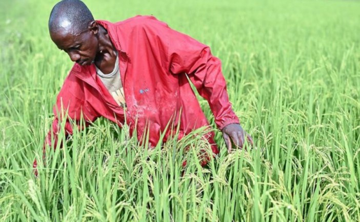 Ethiopia and Ivory Coast, main drivers of Africa's agriculture
