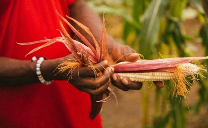 Seven African countries show how the battle against malnutrition can be won
