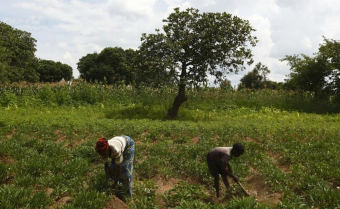Zambia: 'We slept out in the open air like wild animals'
